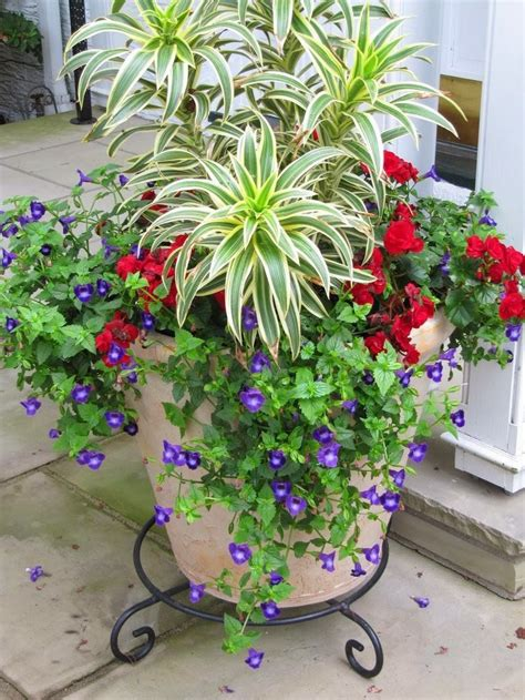 17 best images about outdoor plant containers on pinterest fall containers container