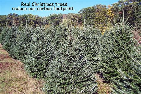 images of christmas tree farms ma best christmas tree