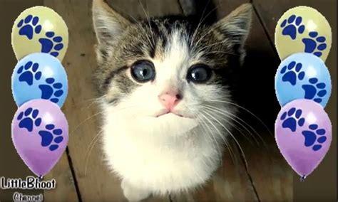imagenes cumpleaños gatitos feliz cumplea 241 os gato cantando te desea un feliz d 237 a