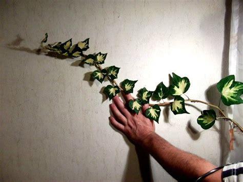ist efeu winterhart efeu goldherz heckenpflanzen bl 252 hend winterhart immergr 252 n