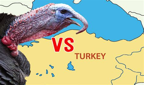 Turkey Turkey Turkey I Made It Out Of Clay Oh Wait Wrong by Turkeys Vs Turkey Which Came