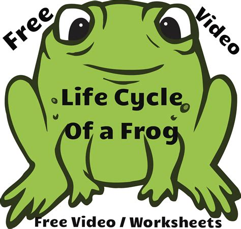 cycle of a cycle of a frog free educational k 2 readyteacher