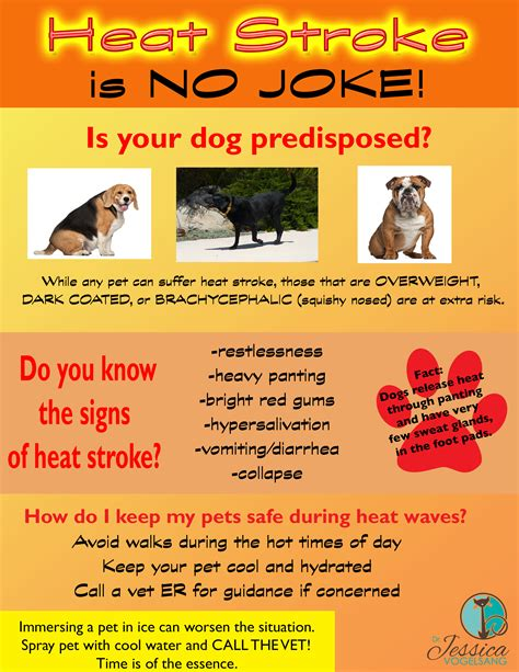 heat exhaustion in dogs heat stroke is no joke pawcurious with veterinarian and author dr v
