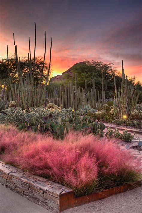 Arizona Desert Botanical Garden Flashlight Tours Desert Botanical Garden Education Outdoors News And Events