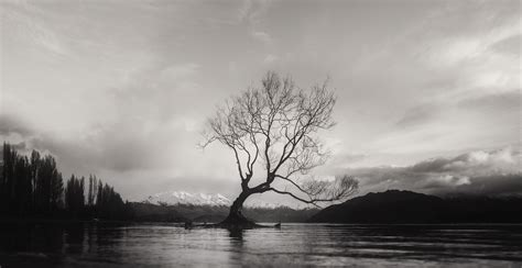 images tree water nature cloud black  white