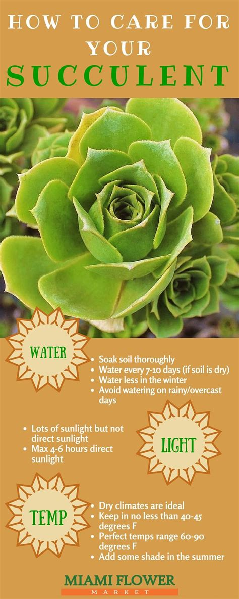 25 best ideas about succulent care on pinterest succulents indoor succulents and propagating