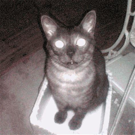 scary cat funny myniceprofilecom