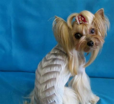 haircuts for yorkie dogs females yorkies hairstyles hairstyles