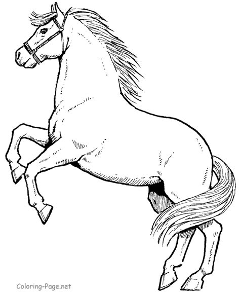 free coloring pages of black beauty horse