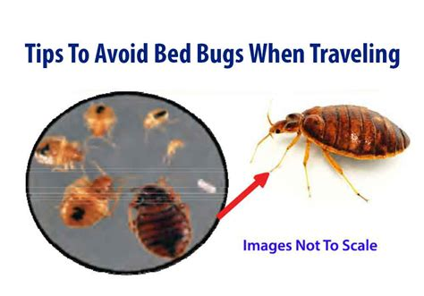 how to avoid bed bugs 8 tips to avoid bed bugs when traveling