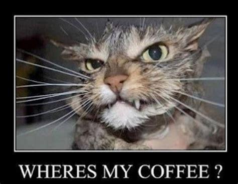 Unamused Cat Meme - funny coffee cat jpg funny 20photos 20of 20cat 20mondays