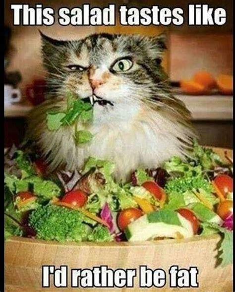 Salad Meme - funny memes today 12 pics loldamn com