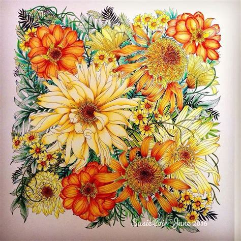 what colored pencils are best for coloring books floribunda floribunda images on