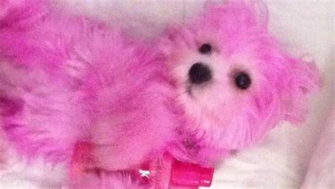 Stelan Pink Puppy 1 watson s pink walk sparks criticism mnn nature network