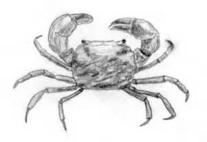 file mud crab jpg wikipedia