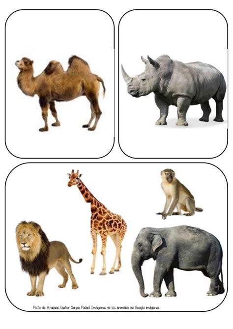 imagenes de animales la selva animales de la selva