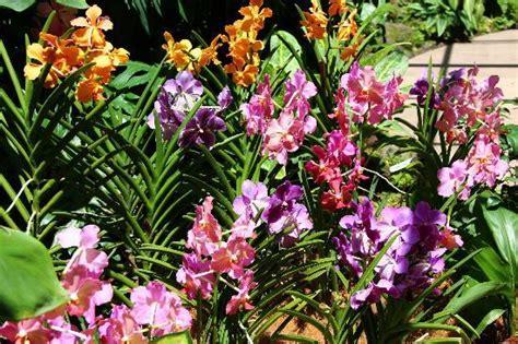 orchideen garten orchid garden picture of singapore botanic gardens