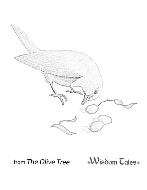 coloring page of olive tree olive tree coloring sheets coloring pages