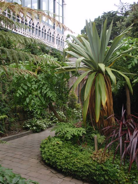 Garden Ideas Tropical Plants In Traditional Gardens Tended Tropical Patio Plants