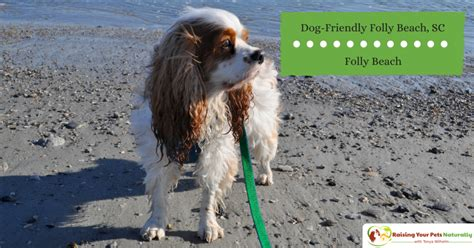 friendly beaches in sc sc archives raising your pets naturally with tonya wilhelm
