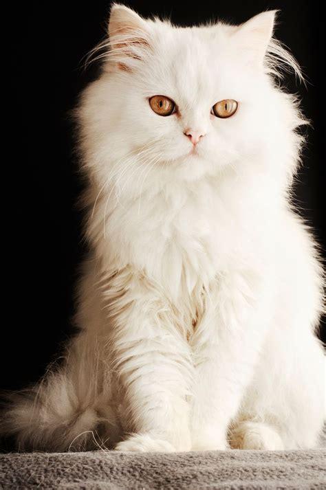 Dress Eye Catz best 25 ideas on character