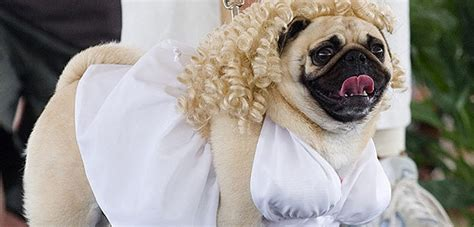 pug costume for humans watcher their dogs dogs names