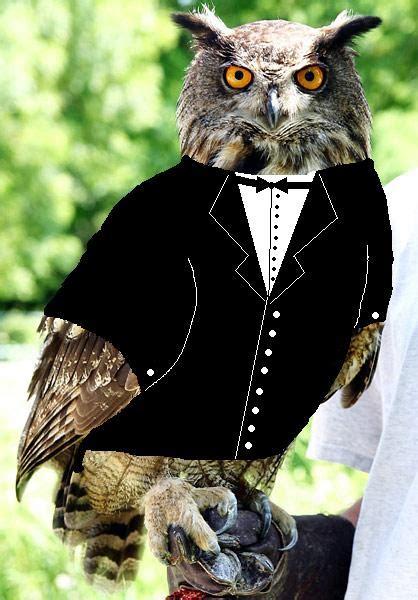 animals  tuxedos