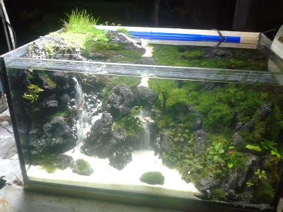Termometer Air Aquarium air terjun aquascape aquascape bogor