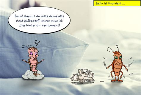Bettwanzen Finden by Wie Erkennt Einen Bettwanzen Befall Mausklick