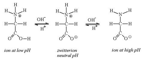 protein zwitterion zwitterion biochem rocks