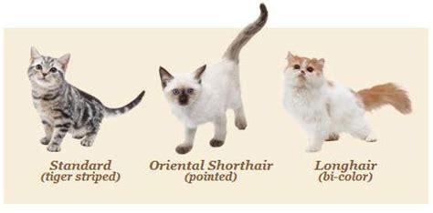 nintendogs cats golden retriever nintendo nintendogs and cats golden retriever and friends 3d 3ds