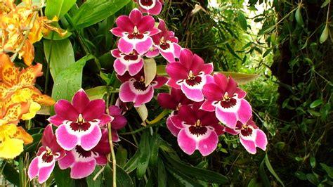 Orchideen Im Garten by Orchideen Im Botanischen Garten San Francisco Bild Foto Jojo Roro Aus Gew 228 Chs