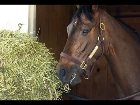 horses eating hay grass food grain funny feeding time tips routine laying  animals children