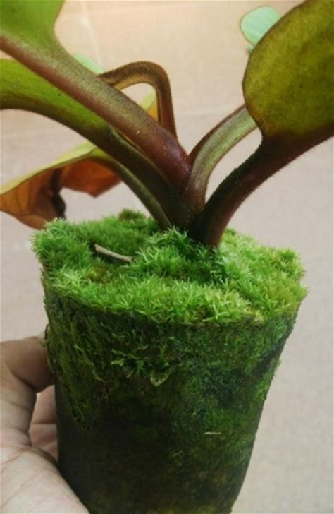 Pot Kantong Tanaman Sayuran 30 Liter jual lumut hidup