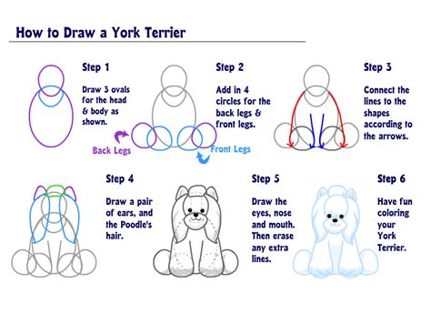 how to draw a yorkie puppy yorkie puppy yorkie and how to draw on