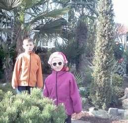 Winterharte Palmen Pflege 5797 by Winterharte Palmen Und Yuccas Kultur Pflege