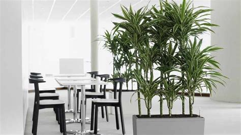 decoracion de interiores con plantas de sombra plantas de interior tipos variedades cuidados y riego