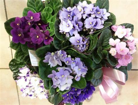 violetta fiori cestino di violette