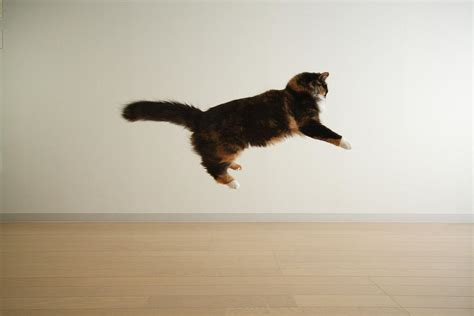 How To Stop A Cat From Jumping On Furniture by Cat Jumping In Air Photograph By Junku