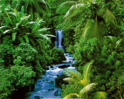 beautiful forests  huge collection  images