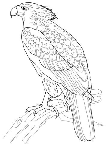 gumamela flower coloring page philippines gumamela flowers coloring pages coloring pages