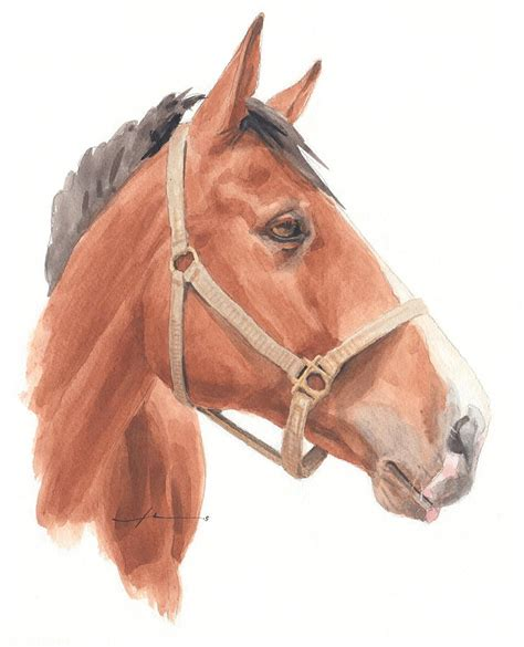Quarter Horse Face Watercolor Portrait Drawing By Mike Theuer