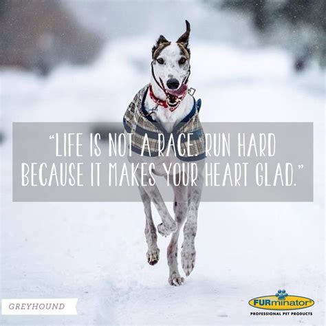 Dogs Motto 18 best breed mottoes images on breeds