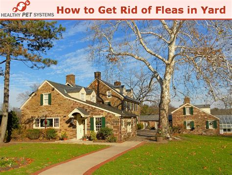 how to get rid of fleas in backyard how to get rid of fleas in yard top 3 methods to get rid