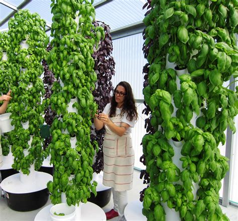 Aeroponic Tower Garden by Local Tower Garden Farmer Produces Aeroponic Food For Disney Emeril S And Other Orlando