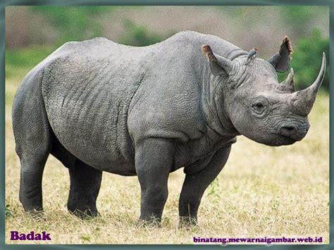 daftar nama binatang herbivora nama gambar binatang