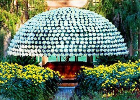 simbolo dei fiori simbologia dei fiori significato fiori conoscere il