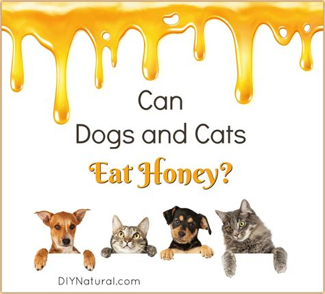 can dogs eat honey can dogs eat honey ways dogs and cats can and should honey