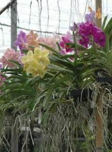 Pupuk Organik Bunga Anggrek agromedia rahasia pemupukan anggrek ala ade andriyani