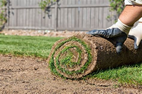 how to lay sod the tree center